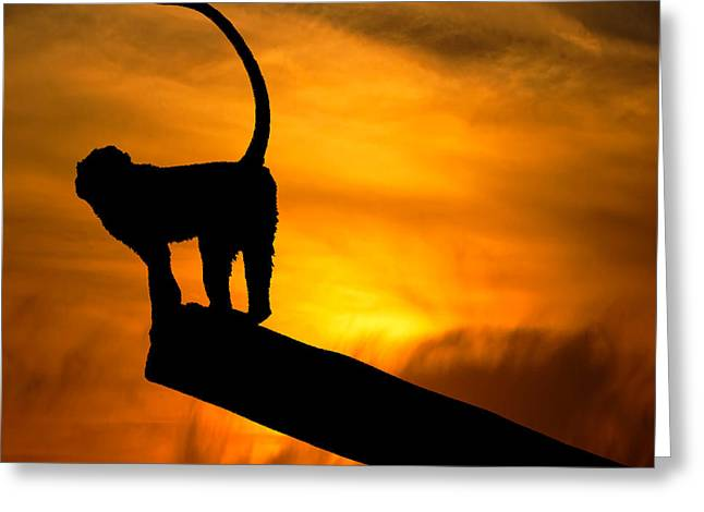 Monkey / Sunset Greeting Card by Martin Newman
