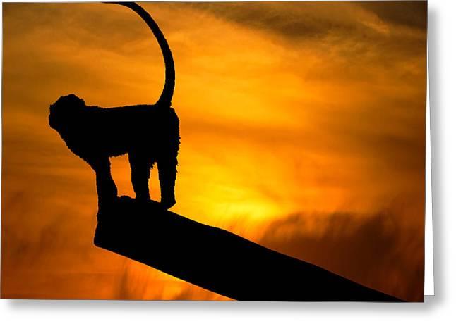 Monkey / Sunset Greeting Card