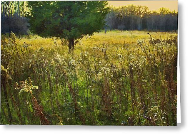 Greeting Card featuring the photograph Sunset Meadow by John Hansen