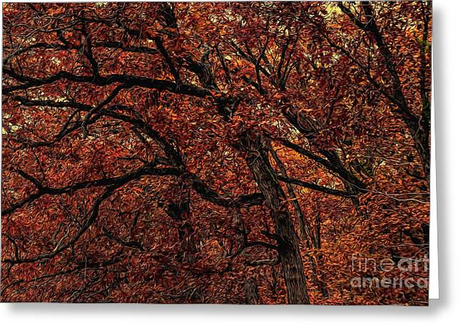 Sunset Oaks 2 Greeting Card by Trey Foerster