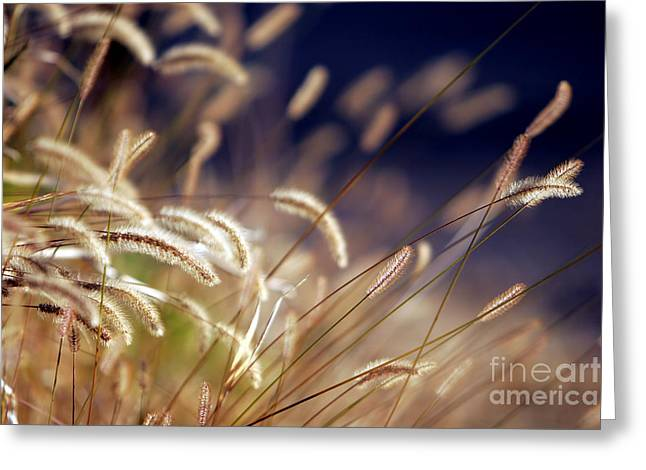 Greeting Card featuring the photograph Sunset On Autumn Grass by Lincoln Rogers