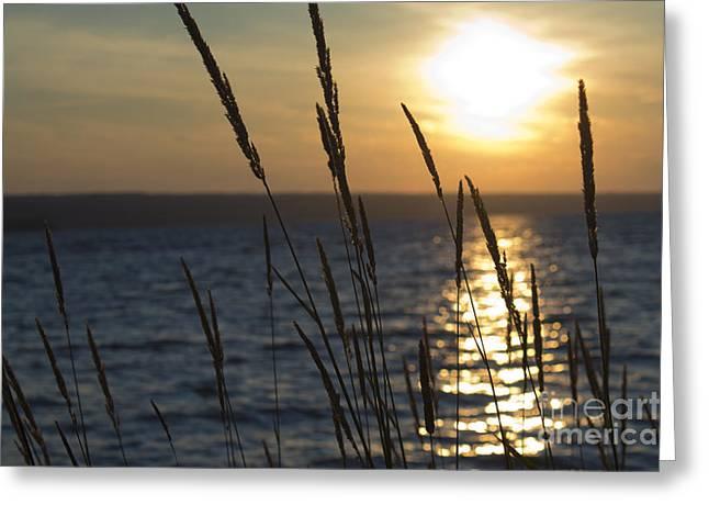 Sunset On Cayuga Lake Greeting Card