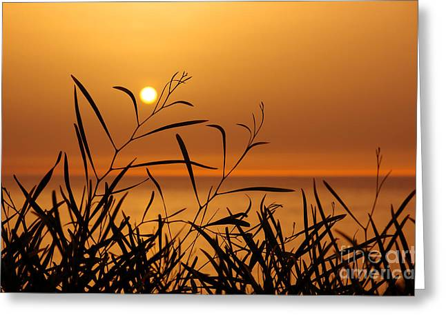 Sunset On Leaves  Greeting Card by Carlos Caetano