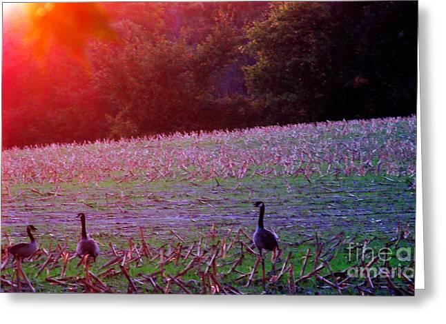 Sunset On Mallards Greeting Card by Tina M Wenger