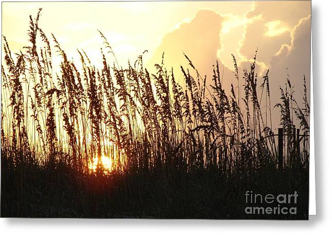 Sunset On The Dunes St. Augustine Greeting Card