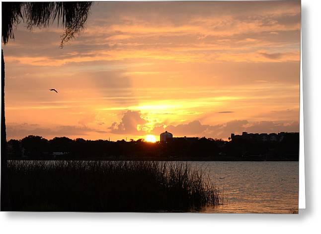 Sunset Over Lake Semniole Greeting Card by Julie Cameron