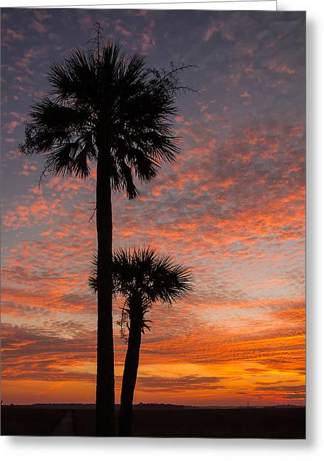 Sunset Over Marsh Greeting Card by Patricia Schaefer