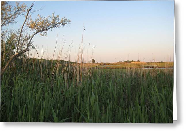 Sunset Over The Marshlands Greeting Card