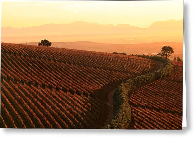 Sunset Over The Vineyards Greeting Card by Riana Van Staden