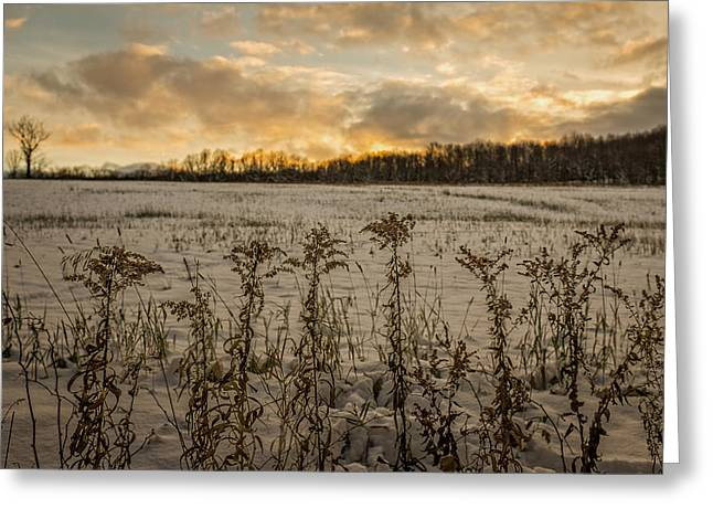 Sunset Over Winter Goldenrod  Greeting Card by Chris Bordeleau