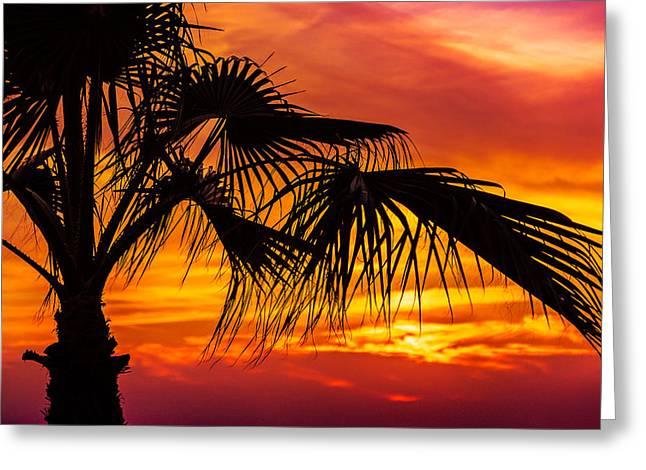 Sunset Palm Tree Greeting Card