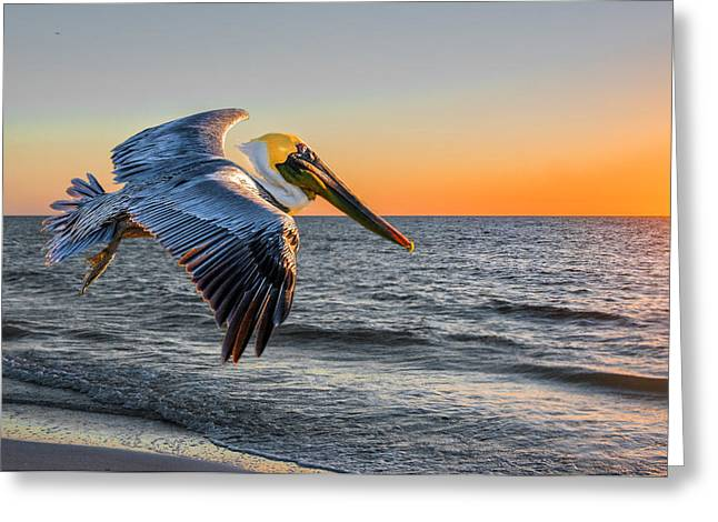 Greeting Card featuring the photograph Sunset Pelican by Brian Tarr