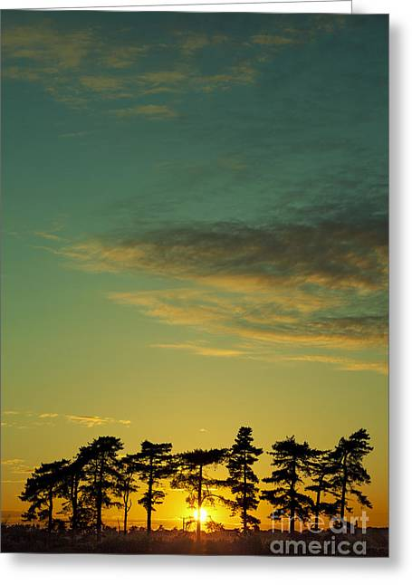 Sunset Pines Greeting Card by Paul Grand