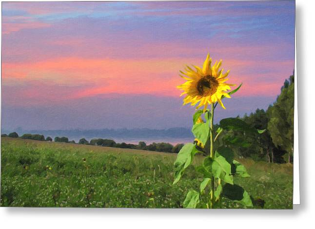 Sunset Pinksky Greeting Card by Anthony Caruso