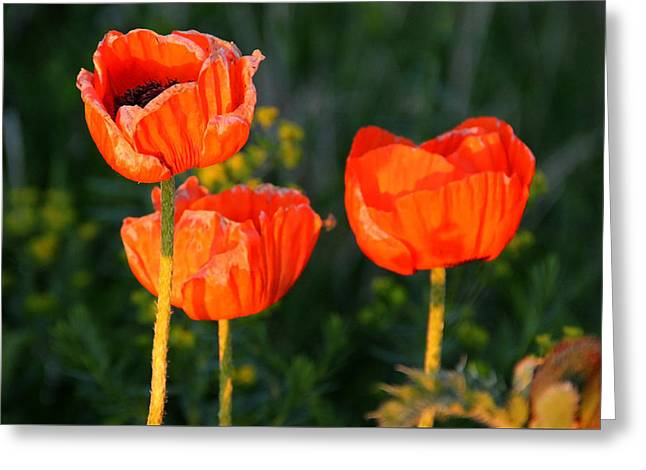 Sunset Poppies Greeting Card by Debbie Oppermann