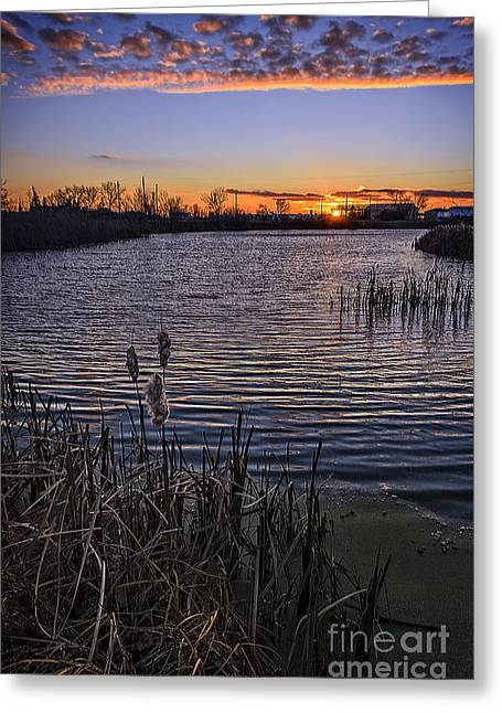 Sunset, Reeds, River.... Greeting Card