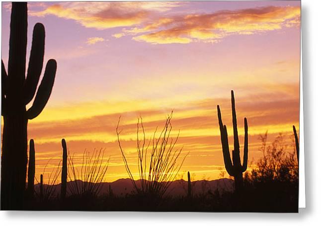 Sunset Saguaro Cactus Saguaro National Greeting Card by Panoramic Images