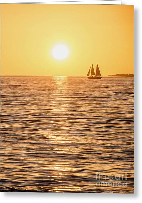 Sunset Sail Greeting Card by Jon Neidert