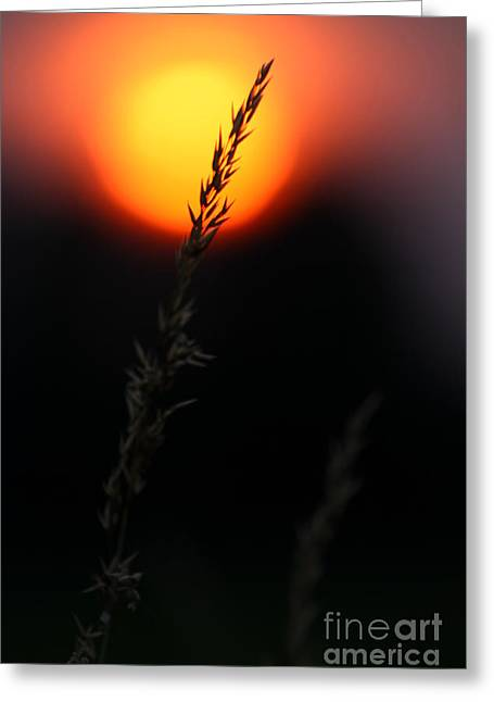 Greeting Card featuring the photograph Sunset Seed Silhouette by Jeremy Hayden