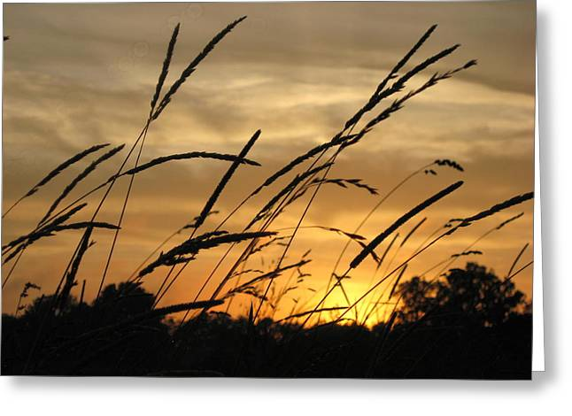 Sunset Sentinels Greeting Card