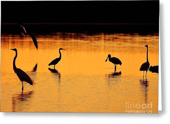 Sunset Silhouette Greeting Card by Al Powell Photography USA