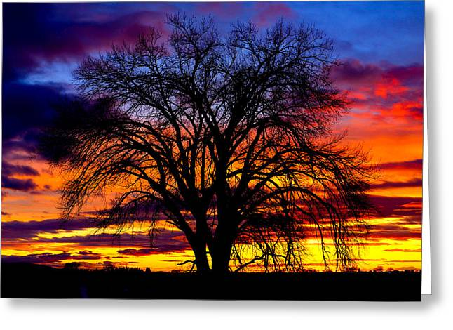 Sunset Silhouette Greeting Card by Greg Norrell