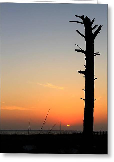 Sunset Silhouette Greeting Card by Saya Studios