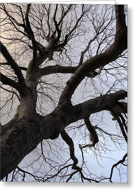 Sunset Skeleton Tree Greeting Card by Michel Mata