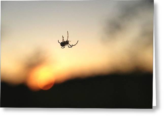 Sunset Spidey Greeting Card by Nikki McInnes