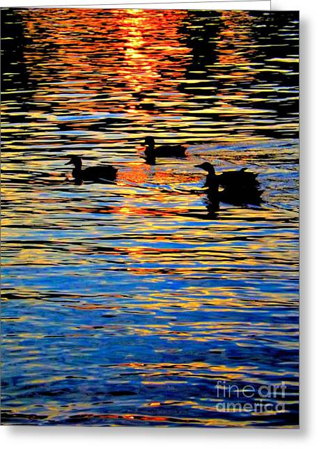 Sunset Swim Greeting Card by Robyn King