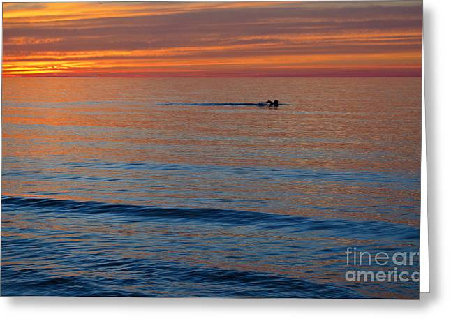Greeting Card featuring the photograph Sunset Swimmer by Maria Janicki