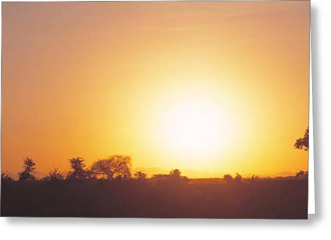 Sunset, Tarangire, Tanzania, Africa Greeting Card by Panoramic Images