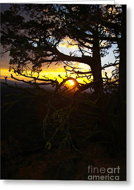Sunset Through Branch Greeting Card by Jane Axman