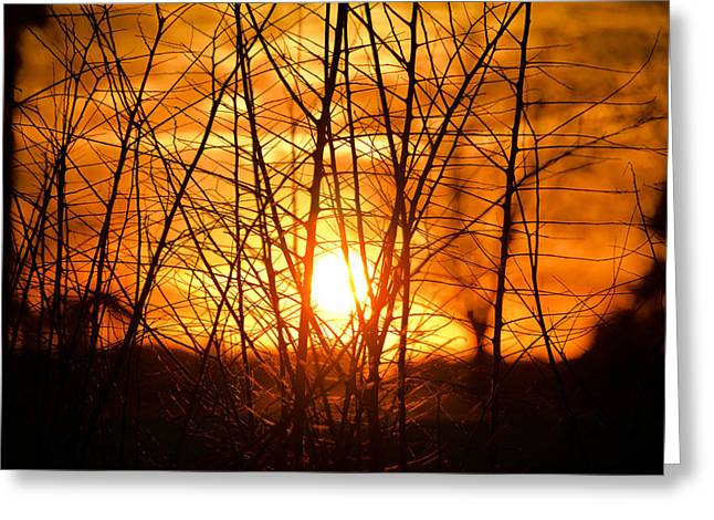 Sunset Through The Brush Greeting Card