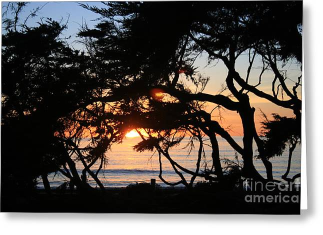 Sunset Through The Cypress Trees Cambria Greeting Card by Ian Donley