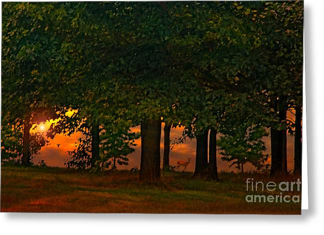Sunset Through The Forest Greeting Card by Tom York Images