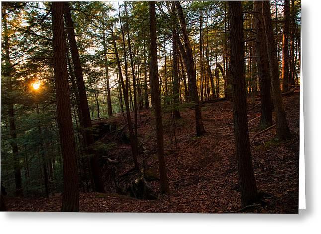 Greeting Card featuring the photograph Sunset Through The Hemlocks by Haren Images- Kriss Haren