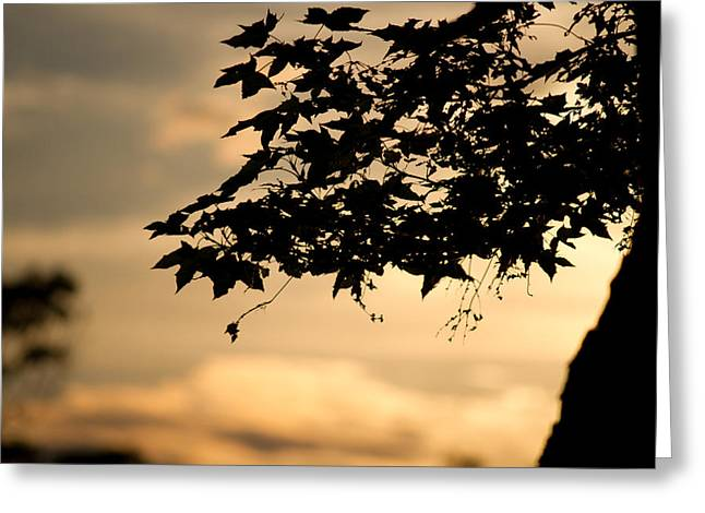 Greeting Card featuring the photograph Sunset Through The Trees by John Hoey