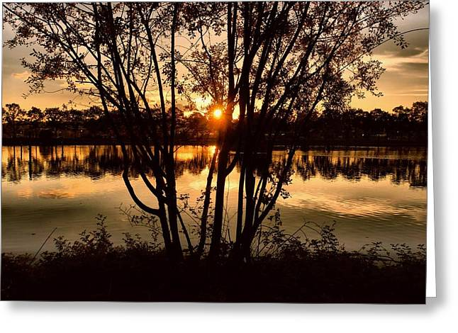Sunset Through The Trees Greeting Card by Patricia Strand