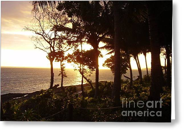 Sunset Through Trees Greeting Card by Tate Winchester