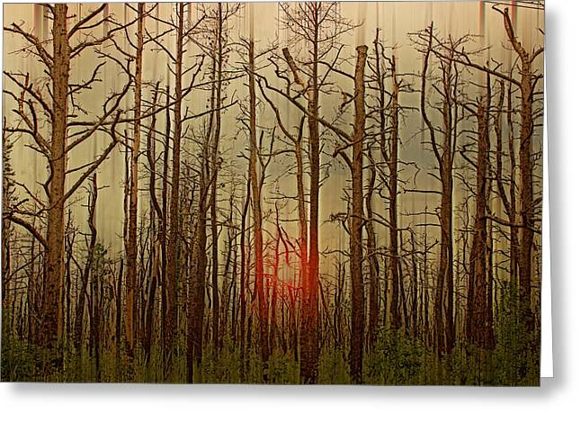 Sunset Thru The Pine Barrens Greeting Card by Tom Gari Gallery-Three-Photography