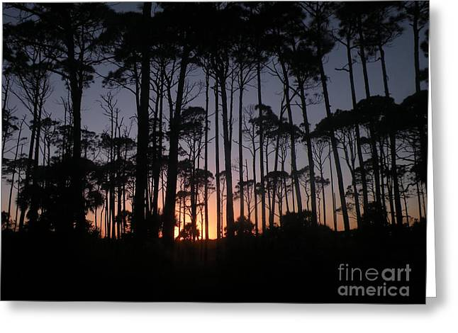 Sunset Thru The Pines II Greeting Card by Lora Duguay