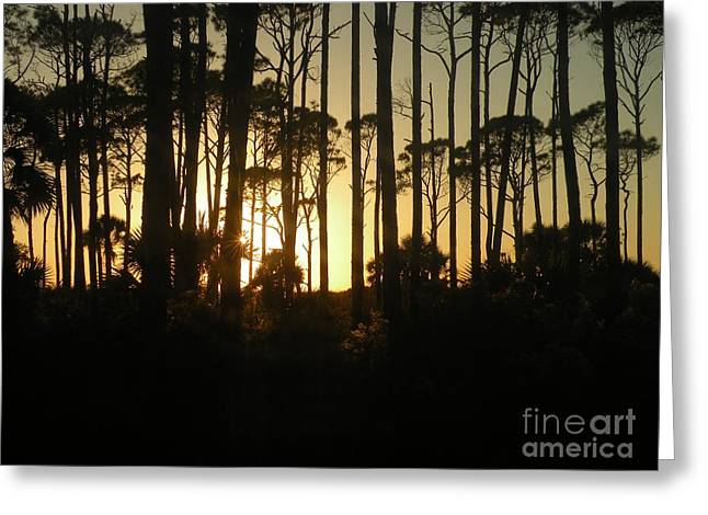 Sunset Thru The Pines Greeting Card by Lora Duguay