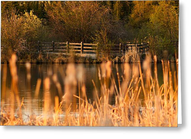 Sunset Tranquility Greeting Card by Valerie Pond