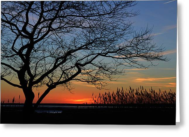 Sunset Tree In Ocean City Md Greeting Card