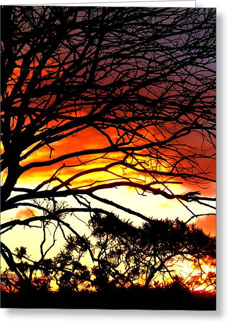 Sunset Tree Silhouette Greeting Card by The Creative Minds Art and Photography