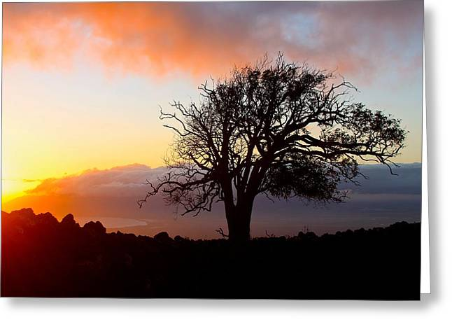 Sunset Tree In Maui Greeting Card by Venetia Featherstone-Witty