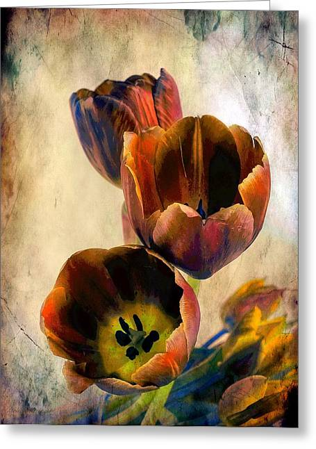 Sunset Tulips Greeting Card