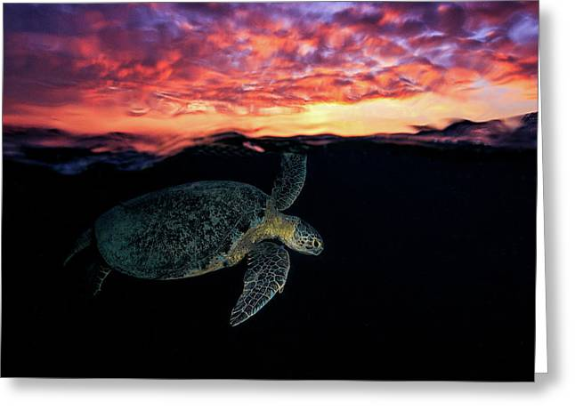 Sunset Turtle Greeting Card