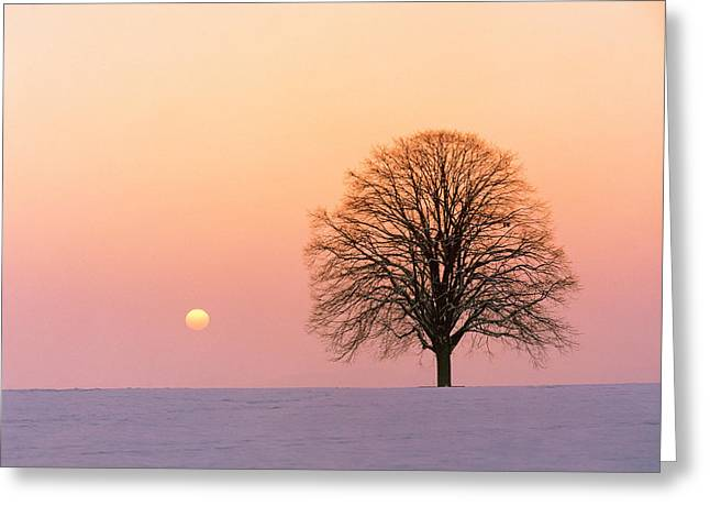 Sunset View Of Single Bare Tree Greeting Card by Panoramic Images